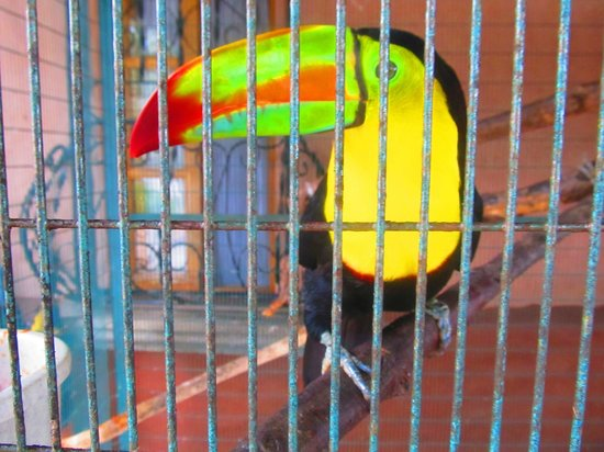Toucan Rescue Ranch : Toucan