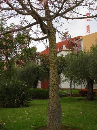 Holiday Club Naxos : На территории отеля.