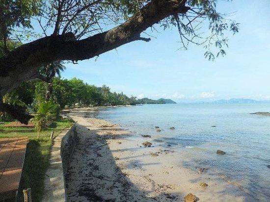 shady place on khlong jark beach