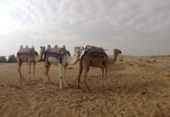 Bab Al Shams Desert Resort & Spa: Morning camel ride