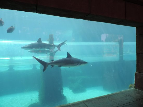 Marine Habitat at Atlantis: waterslide through the shark tank