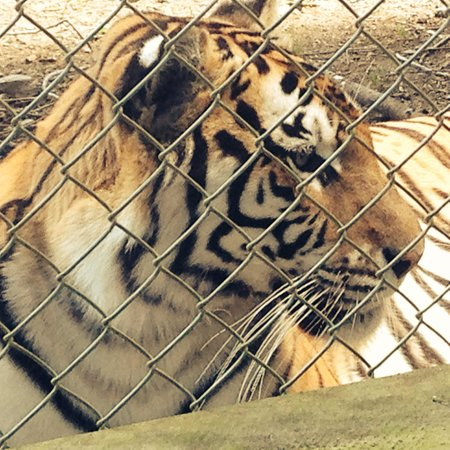 Kamo Wildlife Sanctuary: Kingdom of Zion