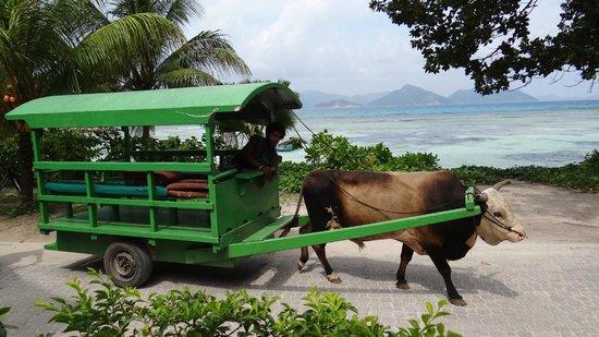 Moon Light Beach Villa: Ochsenwagen die mehrmals am Tag vorbei fahren