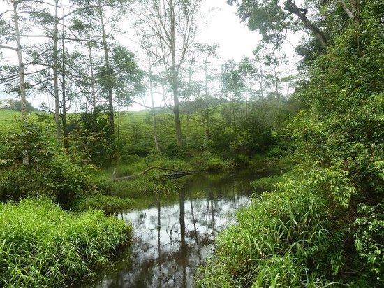 Amani Nature Reserve: foresta