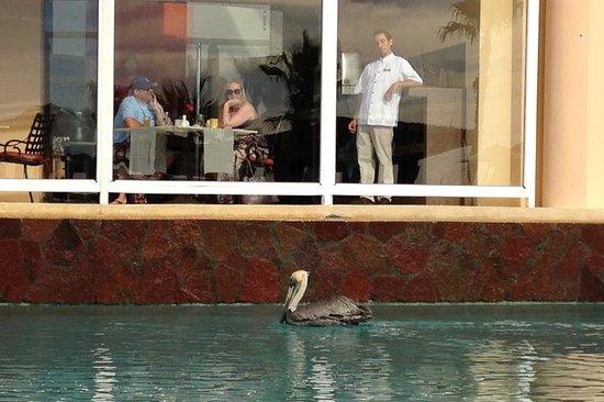 Pueblo Bonito Pacifica Golf & Spa Resort : water show