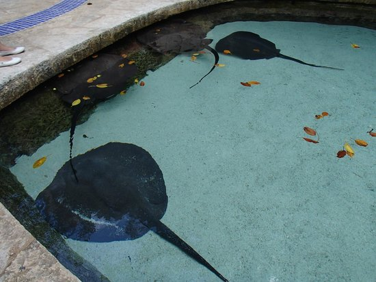 Xcaret Eco Theme Park: Stingrays at my feet