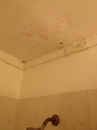 Beachcomber Club: shower ceiling mould