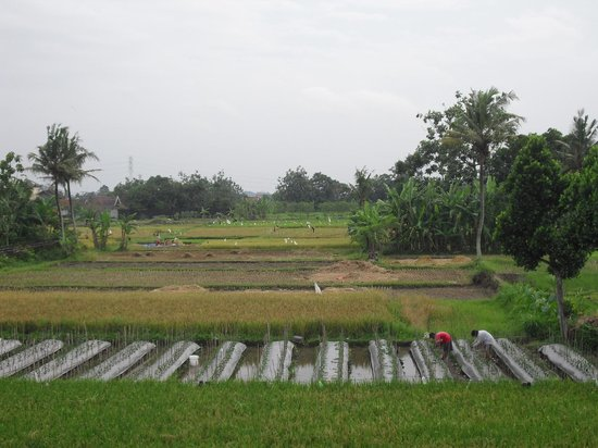Rumah Kayen Family Homestay: View from bedroom windows