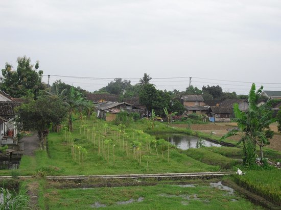 Rumah Kayen Family Homestay: View from verandah