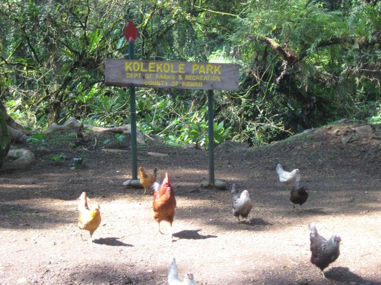 Kolekole Beach Park: Host greeting committee