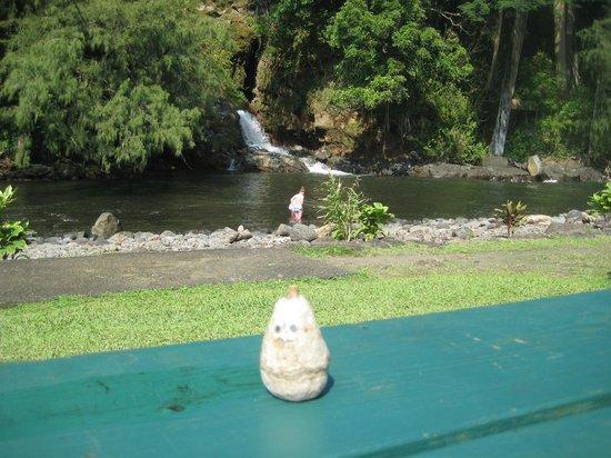 Kolekole Beach Park: Water fall and pool