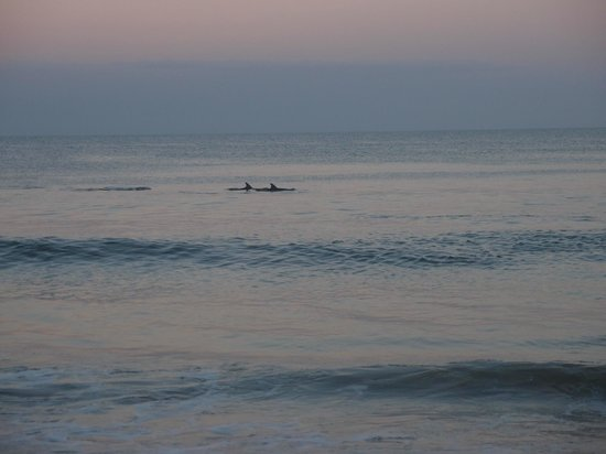 The Robberg Beach Lodge: Dolphins on beach at sunset.  Wow!