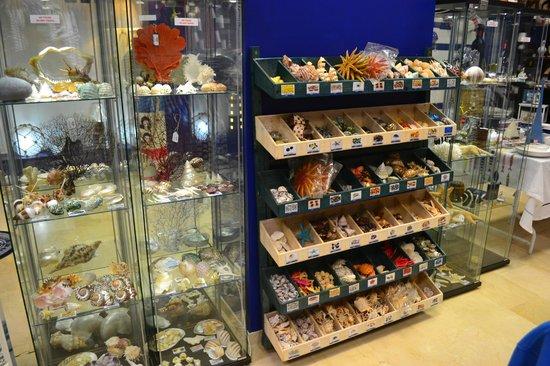La Botavara Nautical Boutique: Sección de caracolas