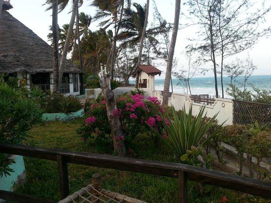 Palm Beach Inn: trädgården