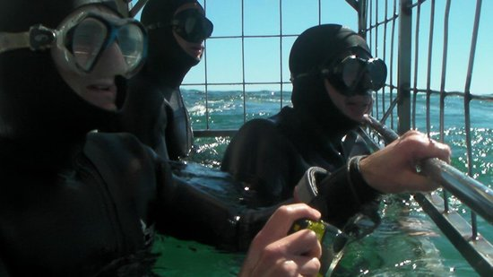 Marine Dynamics: In the cage