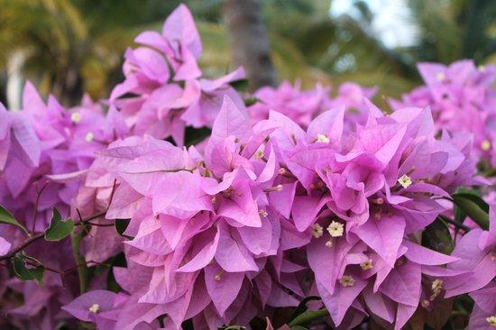 Paradisus Palma Real Golf & Spa Resort : Flowers