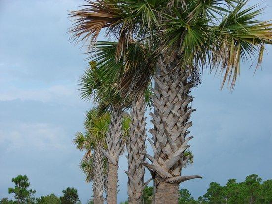 Fairfield Inn & Suites Orange Beach : grounds