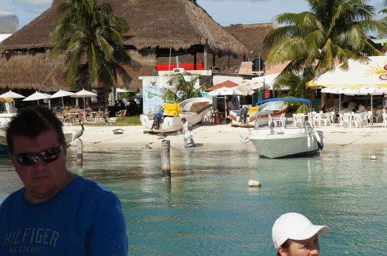 Albatros: Isla Muejres