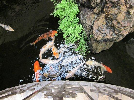 Pequeno Hotel Ejecutivo: Muy limpio estanque dentro del hotel