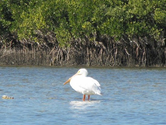 River Safaris And Gulf Charters : Air boat tour