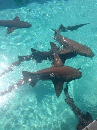 Exuma Beach Resort : 4cs tour