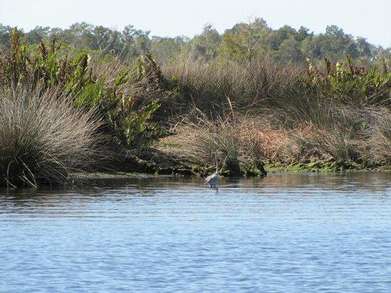 River Safaris And Gulf Charters : Inner waterway