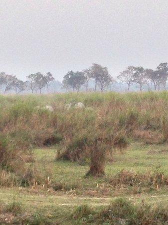 IORA - The Retreat,Kaziranga: Kaziranga Scene