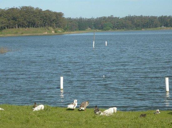 Laguna de los Padres: Laguna de Sierra de los Padres, con gansos