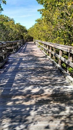 Hyatt Regency Coconut Point Resort & Spa : Walk through the mangroves to get to the ferry that goes to the island