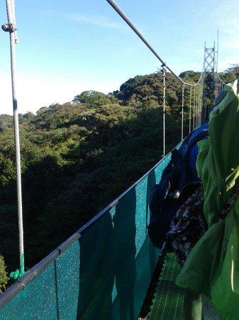 Sky Adventures - Monteverde Park : #5 suspension bridge