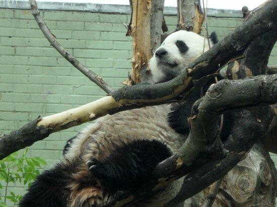 Edinburgh Zoo: :)