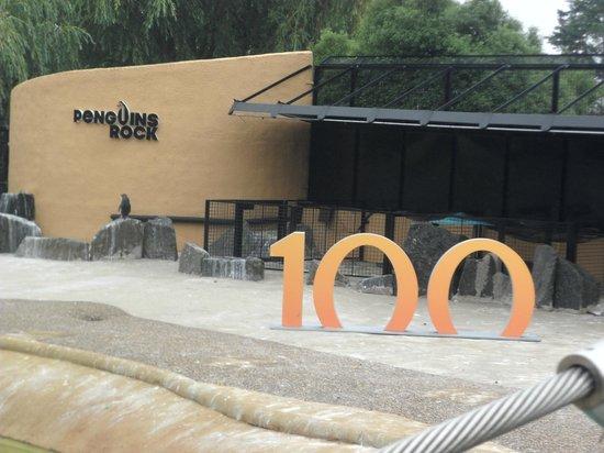 Edinburgh Zoo: 100 years