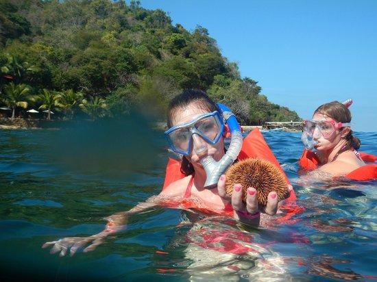 Vallarta Adventures - Las Caletas Beach Hideaway: all sorts of things in the ocean
