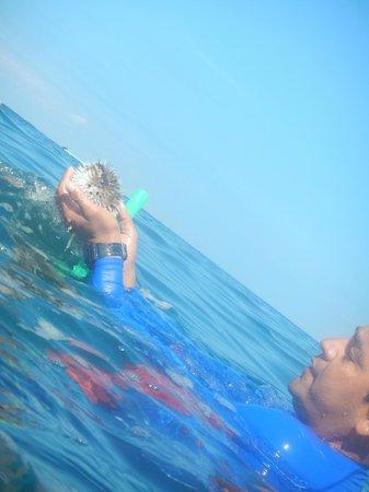 Vallarta Adventures - Las Caletas Beach Hideaway: guide with a puffer fish
