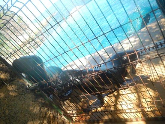 Vallarta Adventures - Las Caletas Beach Hideaway: sea lions