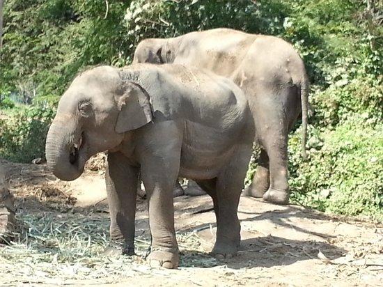 ElephantsWorld: johny l'enfant terrible