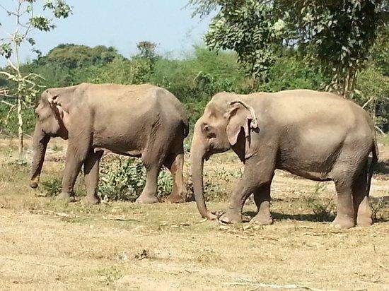 ElephantsWorld: la liberté