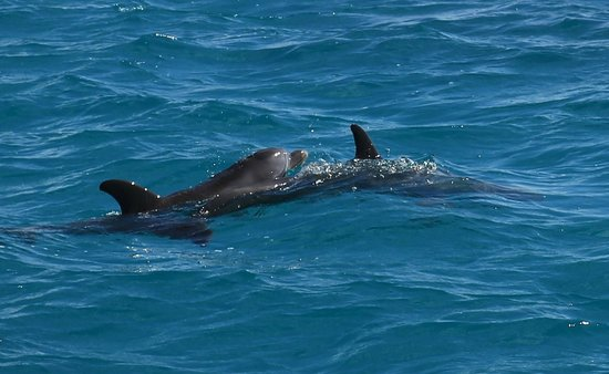 Gansevoort Turks + Caicos: Snorkeling