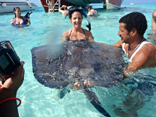 Captain Bryan's Sail and Snorkle Tours: kisses from a stingray