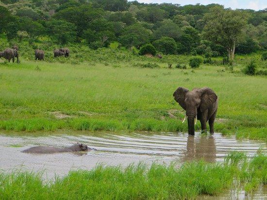 Sanctuary Chobe Chilwero: Waterhole politics--Hippo and Elephant in standoff at Chobe