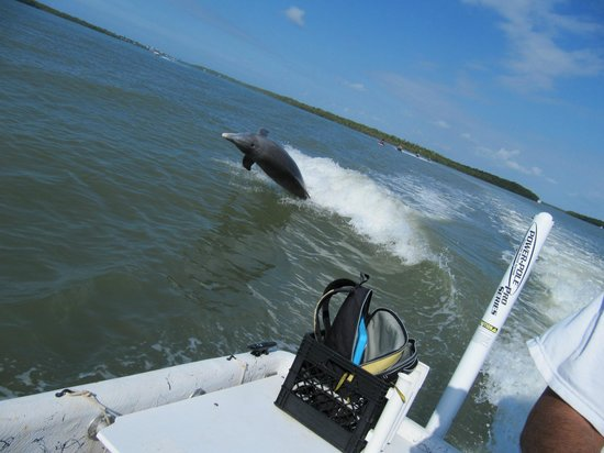 Kayak Marco: One of several dolphins caught behind our boat