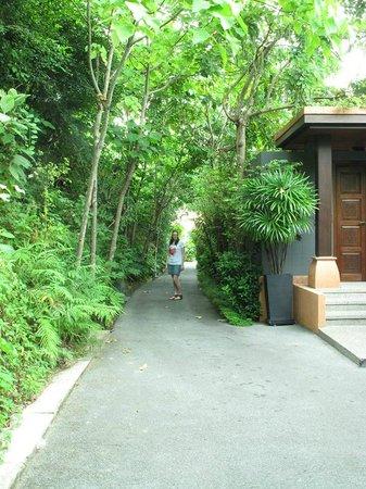 Sri Panwa Phuket : The road to our villa