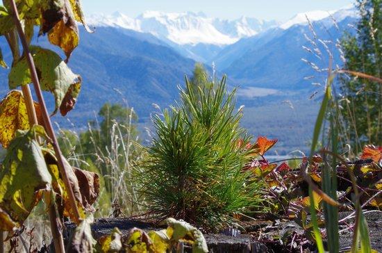 Belukha Mountain: Вид на Белуху из Тюнгура