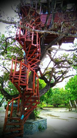 Foster's West Bay : Mr. Foster's Treehouse