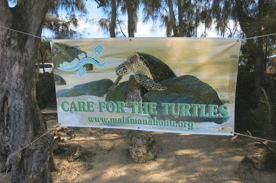 Laniakea Beach: Save the Turtles sign