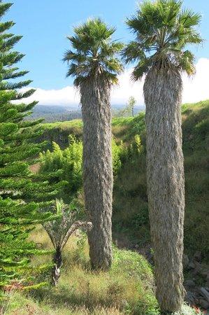 Kula Botanical Garden: Part of the Garden