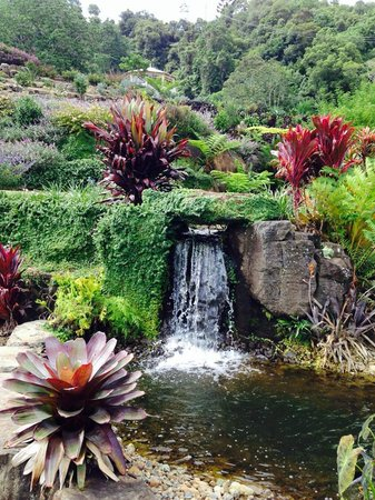 Maleny Botanic Gardens & Bird World: Best explored barefoot on the grassy areas