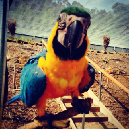 Maleny Botanic Gardens & Bird World: This guy loves almonds, hair and iPhones