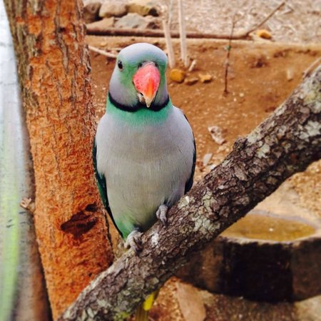 Maleny Botanic Gardens & Bird World: You'll leave this place with a newfound appreciation for birds