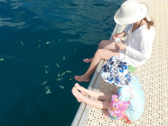 Santa Barbara Beach & Golf Resort, Curacao: Feeding schools of fish at the pier